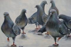 1_les-pigeons